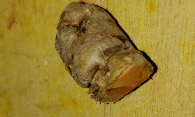 Where are you Turmeric root?