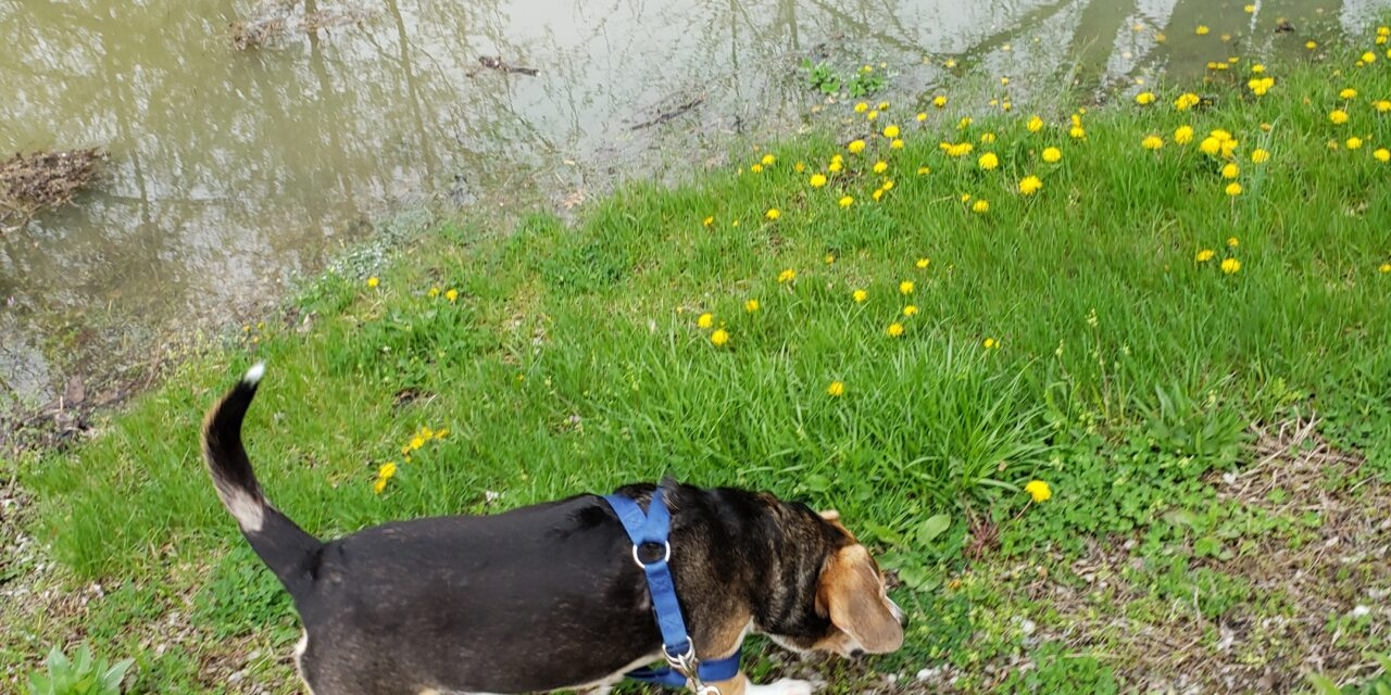 Walking the dog without this is better.  Fort Wayne fitness blog